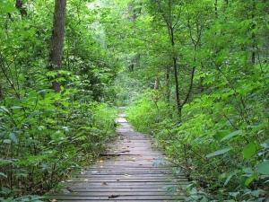path on bridge